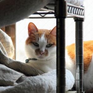 人気スポット♪ 【フクロウ棚ベッド 編】♪_黒猫な日常:クロネコ「黒龍」