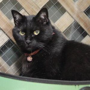 初めて♪ 【New 窓辺ッド 編】_黒猫な日常:クロネコ「黒龍」