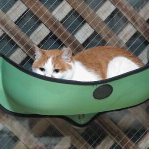 添い寝? 【New 窓辺ッド 編】_黒猫な日常:クロネコ「黒龍」