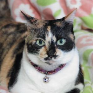 なっちゃんの家族記念日♪ 【6周年:思い出アルバム】_黒猫な日常:クロネコ「黒龍」