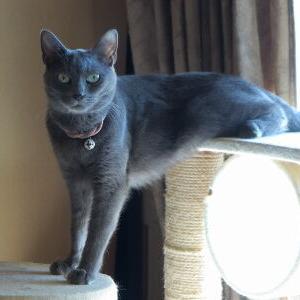 体重測定♪ 【2020年夏】 _黒猫な日常:クロネコ「黒龍」
