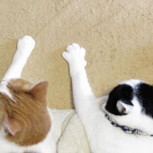 シンクロ率♪ Part2【ハル 編】_黒猫な日常:クロネコ「黒龍」
