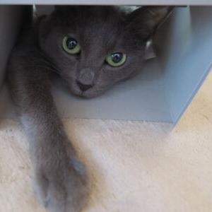 箱猫♪ 【頭隠して尻隠さず 編】_黒猫な日常:クロネコ「黒龍」