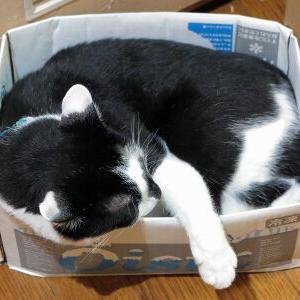 「イジケBox」(笑) 【小鉄 編】_黒猫な日常:クロネコ「黒龍」
