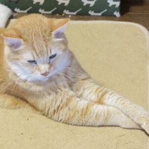 【後ろ足が! 編】 不思議っ子、コルネ♪ Vol.21_黒猫な日常:クロネコ「黒龍」
