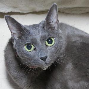 Sexy♪ 【ヒメちゃん 編】_黒猫な日常:クロネコ「黒龍」