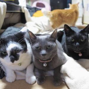 2度目!一緒にまったり♪【3兄弟姉妹 編】_黒猫な日常:クロネコ「黒龍」