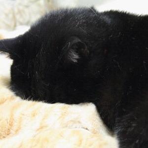 新お邪魔虫(?)【気になる 編】 _黒猫な日常:クロネコ「黒龍」