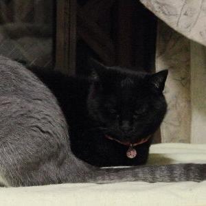 脱走防止用ラティス♪ 【夕涼み(?) 編】&猫ピアス _黒猫な日常:クロネコ「黒龍」