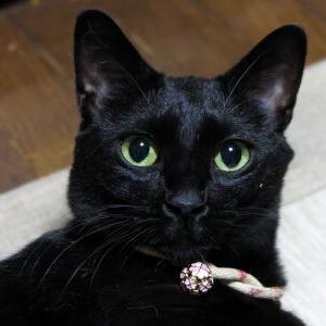 窓辺ッド!【新しい使い方 編】_黒猫な日常:クロネコ「黒龍」