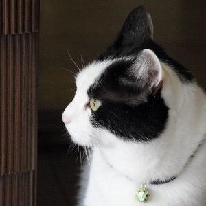 ハルの家族記念日♪ 【6周年:思い出アルバム】_黒猫な日常:クロネコ「黒龍」