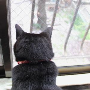 【初めての~ NANA編】 桜観賞 2019♪ _黒猫な日常:クロネコ「黒龍」