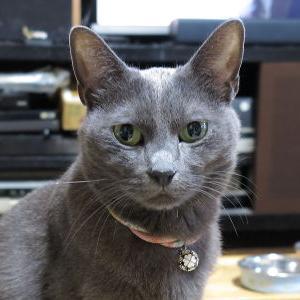 箱猫♪ 【順番待ち(?)編】_黒猫な日常:クロネコ「黒龍」