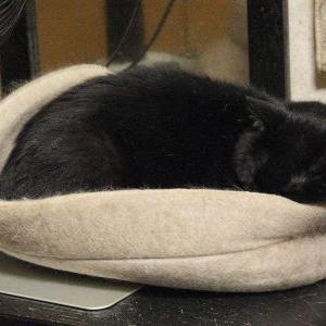 ところてん状態? コルッチの憂鬱(汗)【小鉄 編】 _黒猫な日常:クロネコ「黒龍」