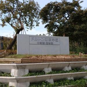 ドルトン東京学園
