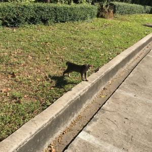 ベンジャキティ公園の猫 Part2