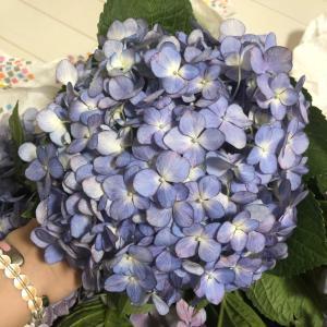 アジサイ*紫陽花*の季節です