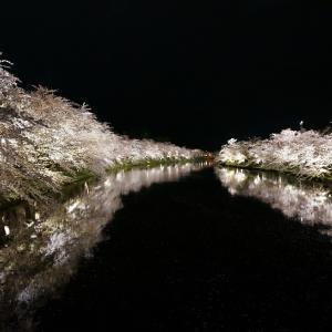 弘前さくらまつり行ってきました。