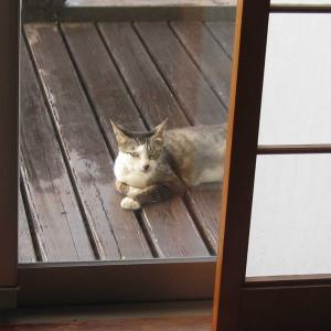 うちのノラ猫3