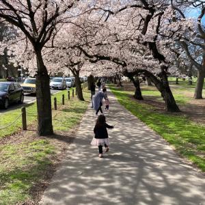 桜と副反応