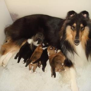 5年前、ナナはお母さんになりました。
