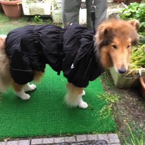 雨、雨、雨❗️