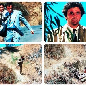 刑事コロンボ#11-2 悪の温室/ THE GREENHOUSE JUNGLEBLUEPRINT 1972年 あらすじとネタバレ(後半) 独身高齢こじらせ男がコロンボをぶ男と呼んだ!