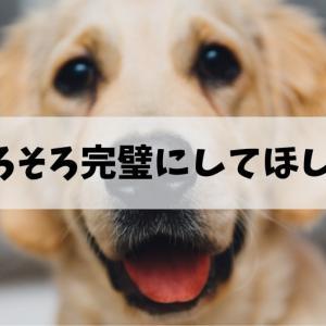 黒川家ワンコのトイレ事情