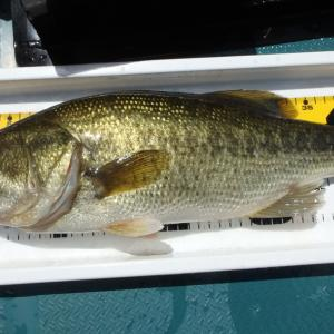 8/2釣行記。2週連続亀山湖で倍返し成功。7匹ゲット最大46cm!