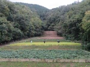 丹波並木道中央公園(兵庫・篠山市)