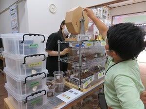みんなの昆虫館(兵庫・たつの市)