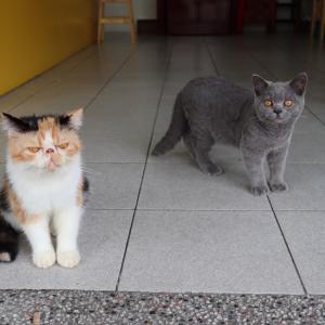 猫がいる台湾彩券へ再び訪問。たっぷり猫を愛でる 5日目@台湾旅行7回目 2019.6 台南・台北