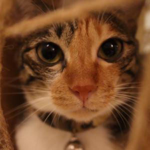 猫のいる足つぼマッサージ屋・腳丫子足體館さんへ! 5日目@台湾旅行7回目 2019.6 台南・台北