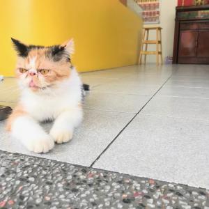 猫がいる台湾彩券で猫を愛でつつ宝くじをしつつ 2日目@台湾旅行7回目 2019.6 台南・台北
