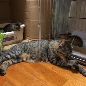 【地域猫】Vol.14-2 母子ともに順調です。