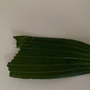 【緊急事態】エマ、ゆりの葉食べる。