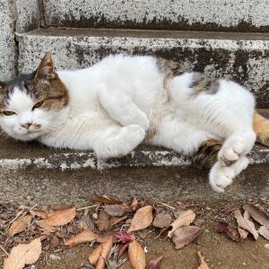 【地域猫】Vol.27 ケガ猫