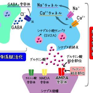 抗てんかん薬の作用機序を図と表でまとめてみる。イーケプラ他。