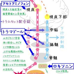 トラムセットとNSAIDsの併用は可能?作用機序を図で説明。