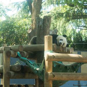 上野動物園に行こう! 〜日本のアイドル「ジャイアントパンダ」に会いに行った話〜