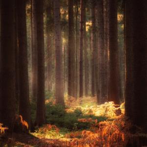 【おすすめ小説】美しき世界観!幻想的な物語に引き込まれる『この闇と光』