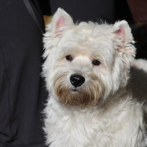 犬がいる家の掃除方法!ペットの掃除、消臭スプレーは何が一番良い?
