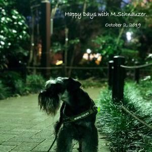 【在宅勤務】夕方ロング散歩、わーい♪