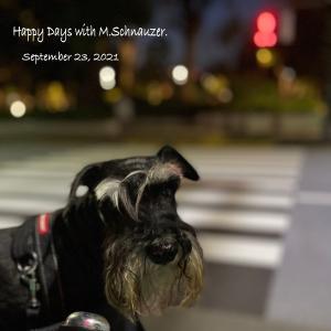 飼い主の目標 毎日1万歩に協力する愛犬・笑