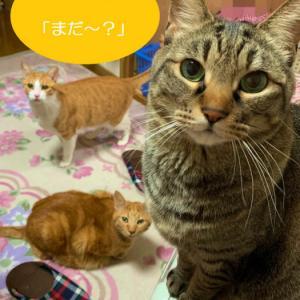 猫たちの楽しみなご飯の時間。ご飯の催促がはんぱない!