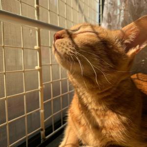 病気で食べなくなった猫も食べる【高知県やいか】の猫のおやつ