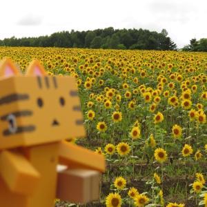 北竜町 「ひまわりの里」は日本最大級のひまわり畑