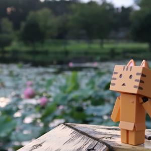 安平町 北海道随一ともされる鶴の湯温泉の蓮池