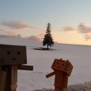 美瑛町 クリスマスツリーの木の夕焼け