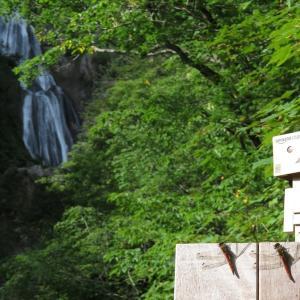 東川町 北海道最大の落差を誇る羽衣の滝